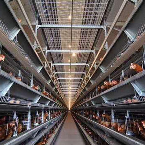 辽宁蛋鸡养殖设备